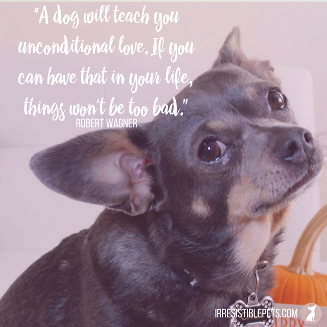 """A dog will teach you unconditional love. If you can have that in your life, things won't be too bad."" -Robert Wagner"