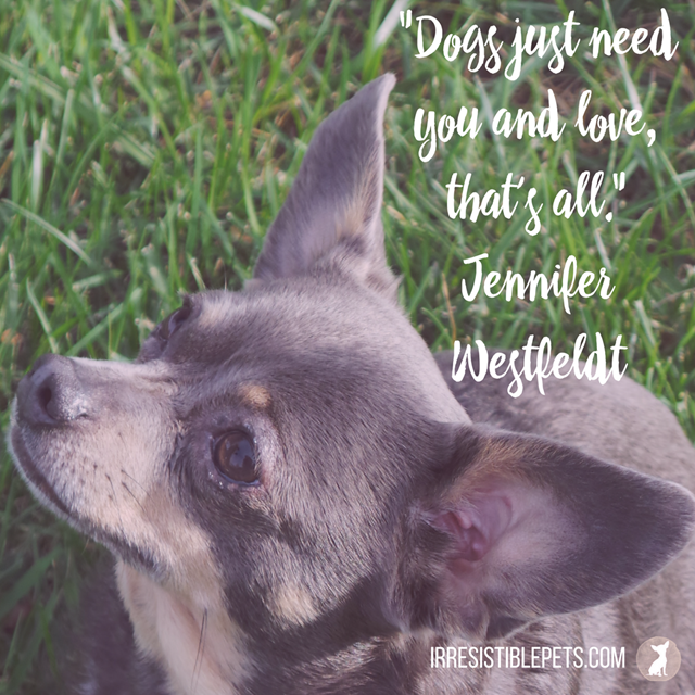 Dogs just need you and love, that's all. —Jennifer Westfeldt