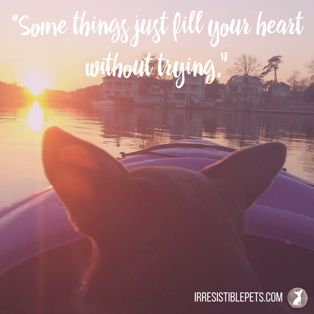 """Some things just fill your heart without trying.-"