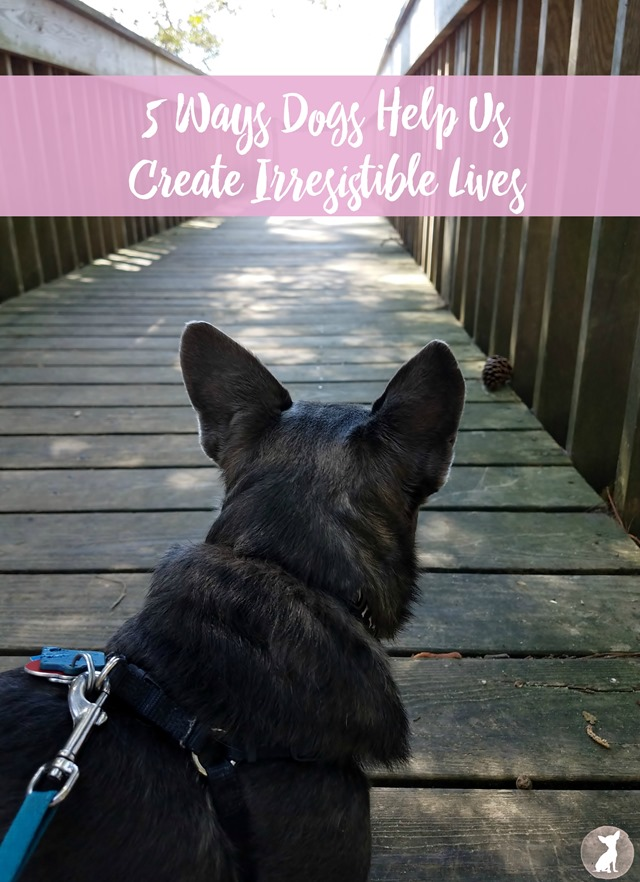 5 Ways Dogs Help Us Create Irresistible Lives