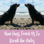 How Dogs Teach Us To Break the Rules