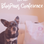 How To Prepare Your Dog for the BlogPaws Conference
