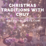 Christmas Traditions with Chuy