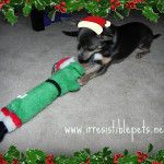 Chuy's Corner: 1st Christmas Toy of 2010