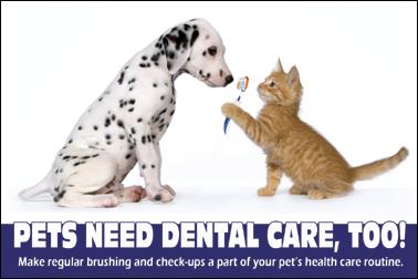 pet_dental_health