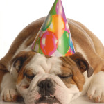Top 5 Free Ways to Celebrate Your Dog's Birthday
