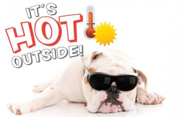 summer heat pet safety tips