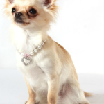 Doggie Bling on Sale Now!