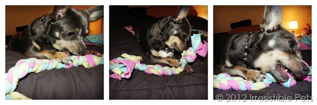 Chuy Chihuahua DIY Rope Toy