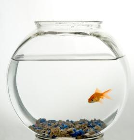 Robo fish website for dating 4