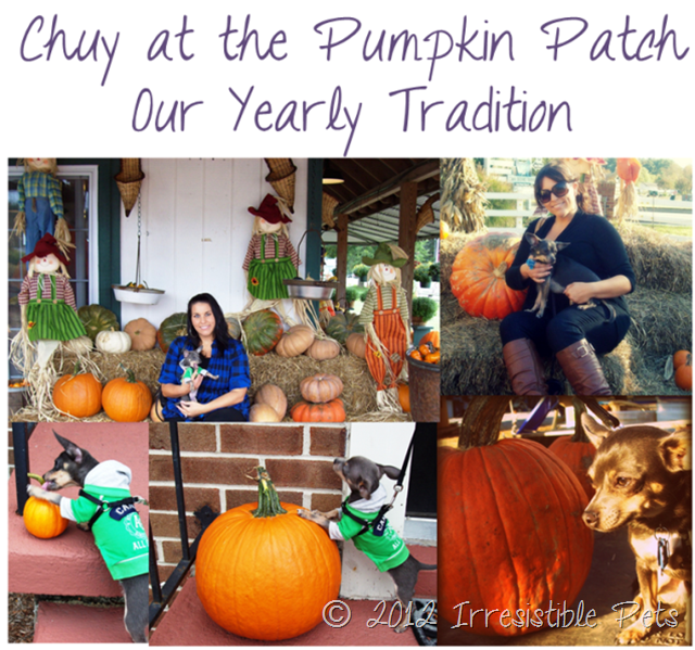31 Days of Howloween - Chuy at the Pumpkin Patch