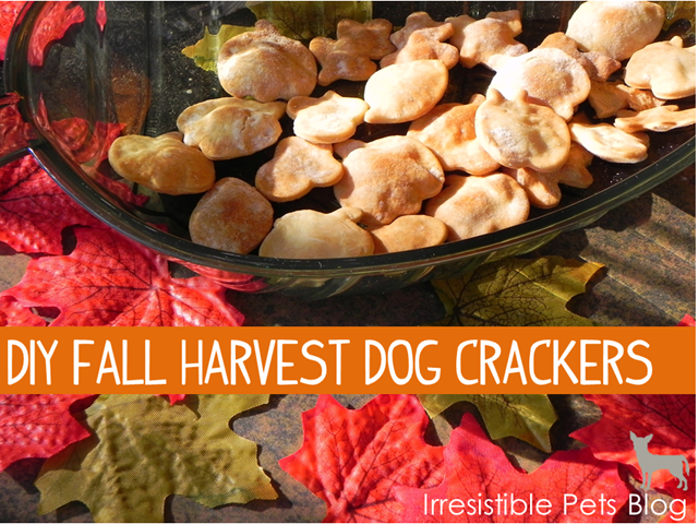 DIY Fall Harvest Dog Crackers