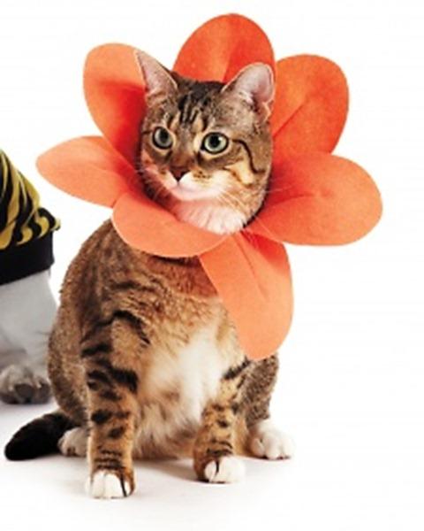 DIY Pet Halloween Costumes - Flower Petal Collar