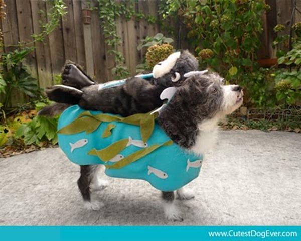 DIY Pet Halloween Costumes - Sea Otter