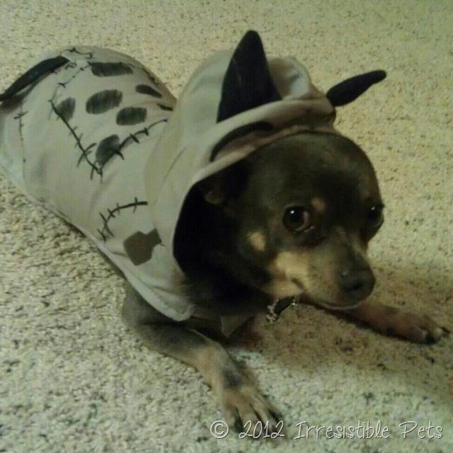 Frankenweenie - Chuy Chihuahua Costume