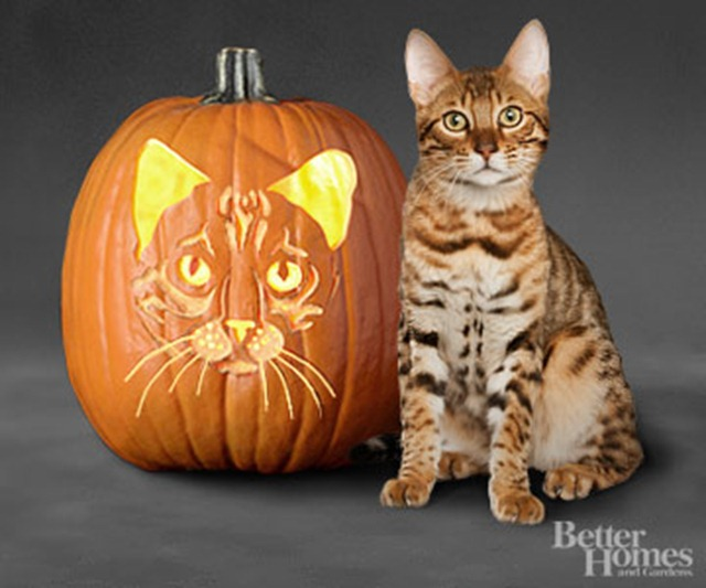 Howl o ween free pet pumpkin carving patterns ideas