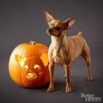 Howl-O-Ween {Free Pet Pumpkin Carving Patterns & Ideas}