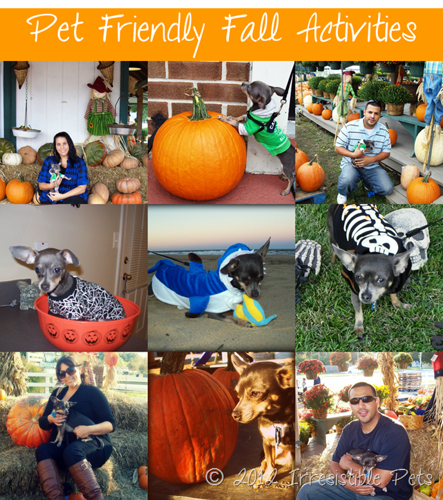 Pet Friendly Fall Activities