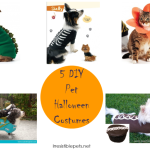 31 Days of HOWL-O-WEEN {5 DIY Pet Halloween Costumes}