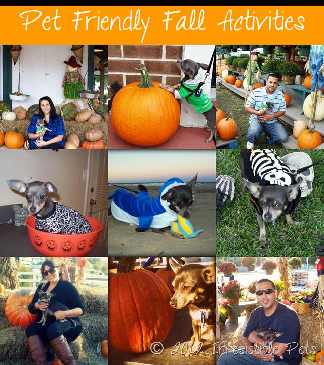 Pet Friendly-Fall-Activities