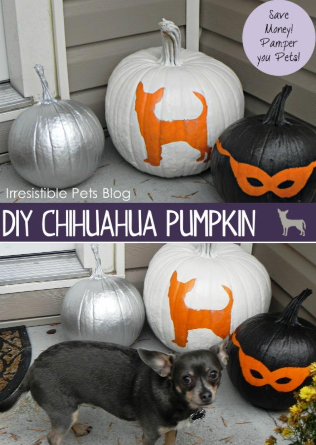 DIY Chihuahua Pumpkin IrresistiblePets.com