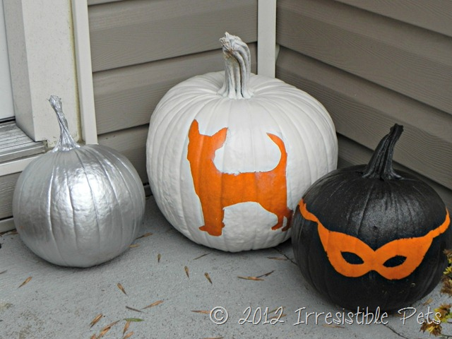 DIY Chihuahua Pumpkin