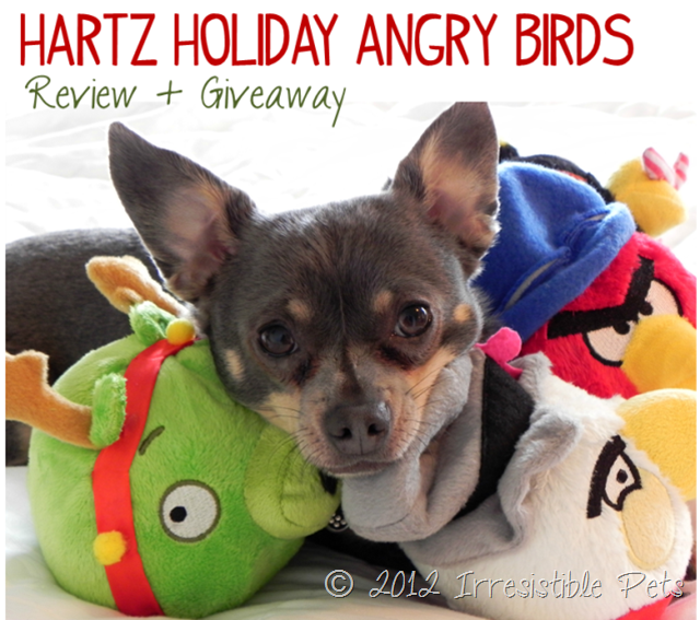 Hartz Angry Birds Winter Pet Toys Review and Giveaway