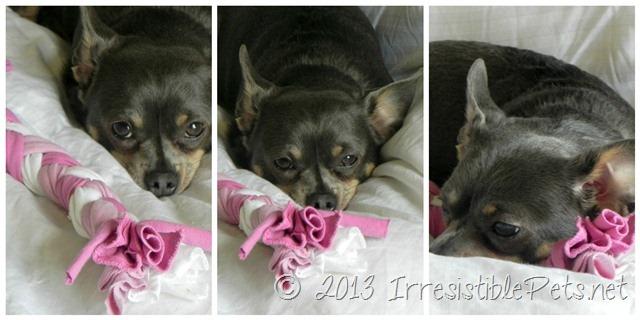 Valentine S Day Dog Toys : Diy valentines day dog toy irresistible pets