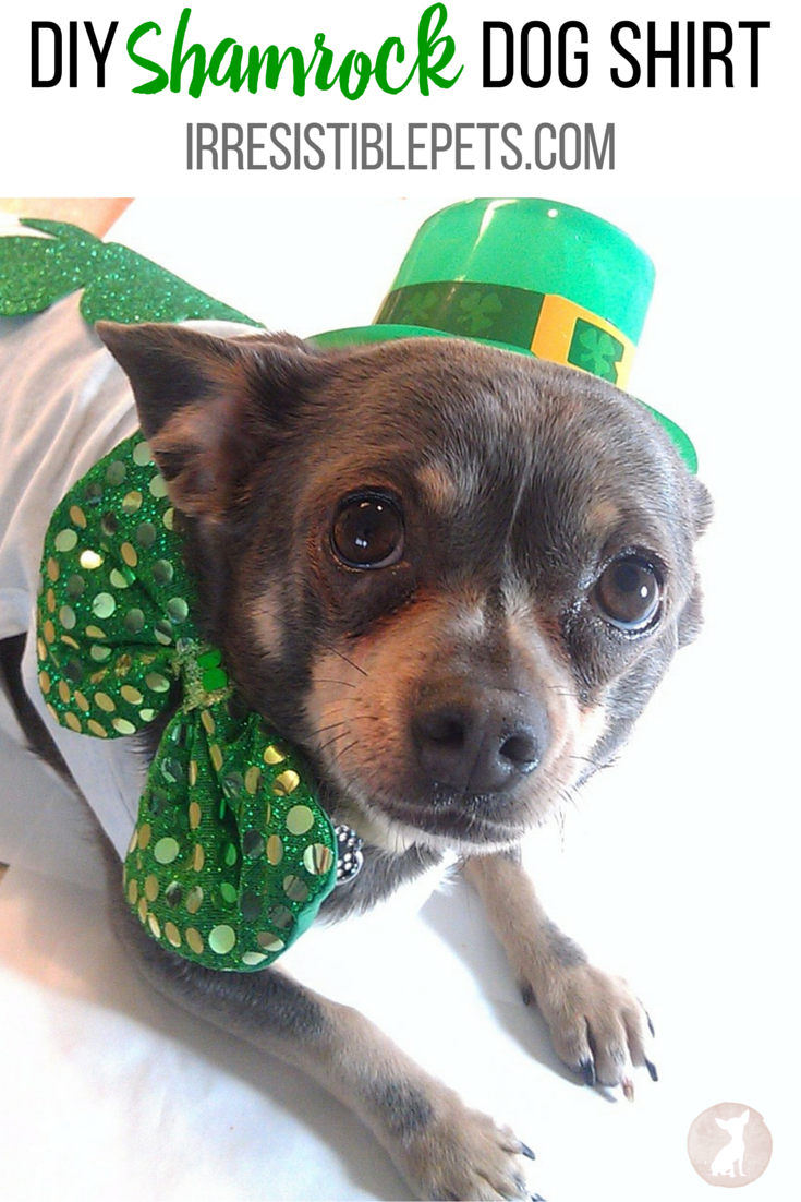 DIY Shamrock Dog Shirt by IrresistiblePets.com