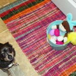 Easter Egg Hunt, Chihuahua Style