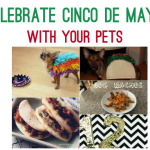 Celebrate Cinco de Mayo with Your Pets