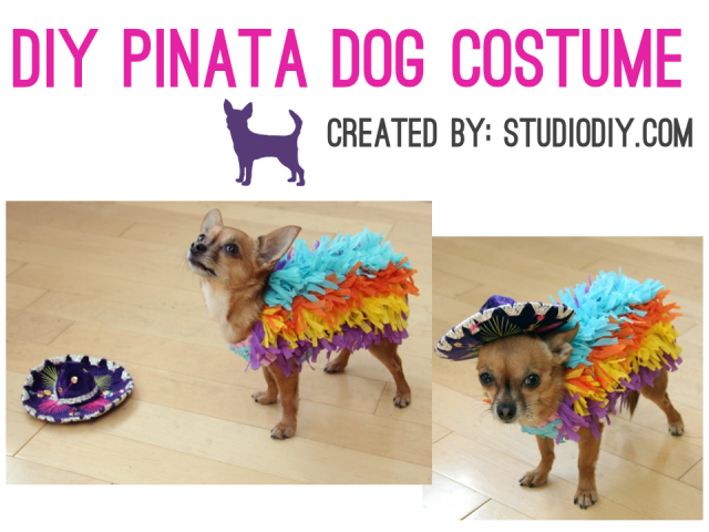 Cinco de Mayo - DIY Pinata Dog Costume