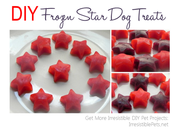 DIY Frozen Star Dog Treats