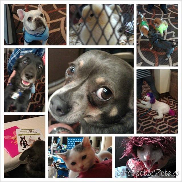 The Irresistible Pets at Blog Paws