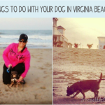 Things to Do With Your Dog in Virginia Beach