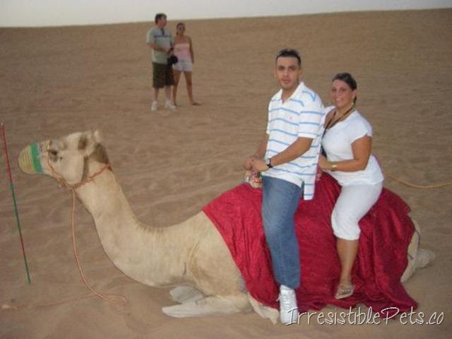Dubai Camel Riding
