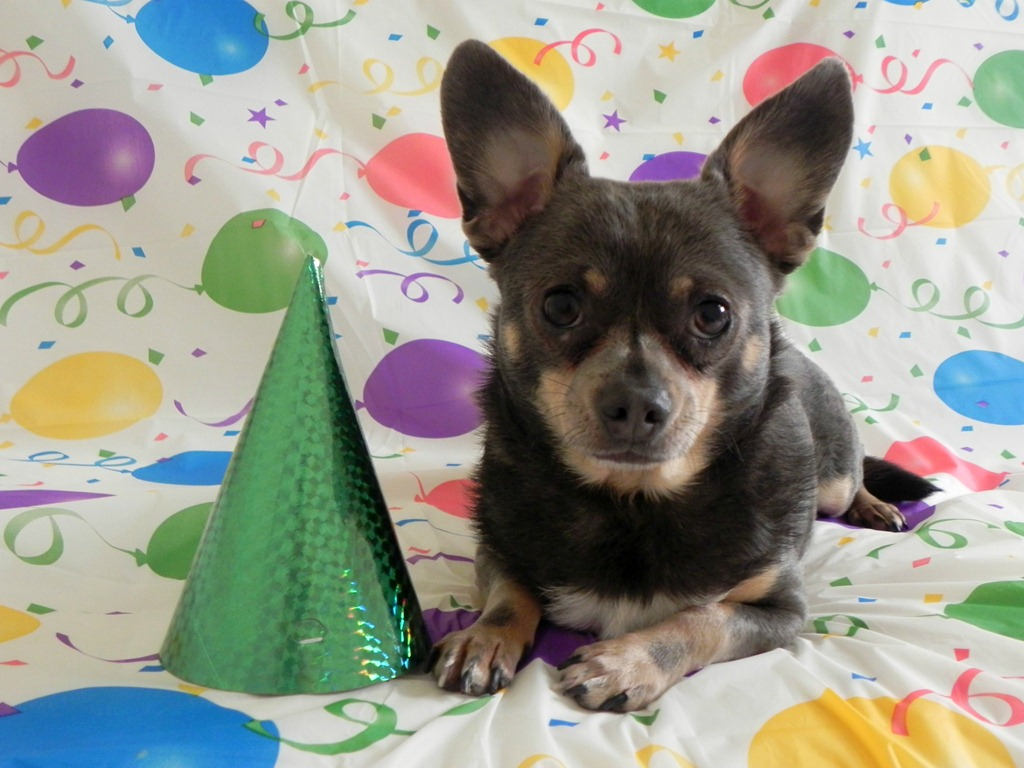Chihuahua Birthday Cake Images