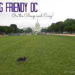 Dog Friendly DC, Cheap and Easy!