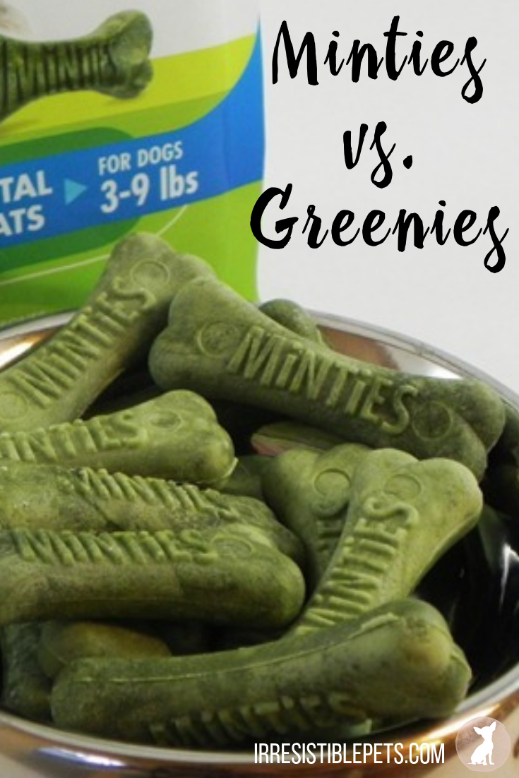 Minties vs Greenies. Which dental dog treat do you prefer_