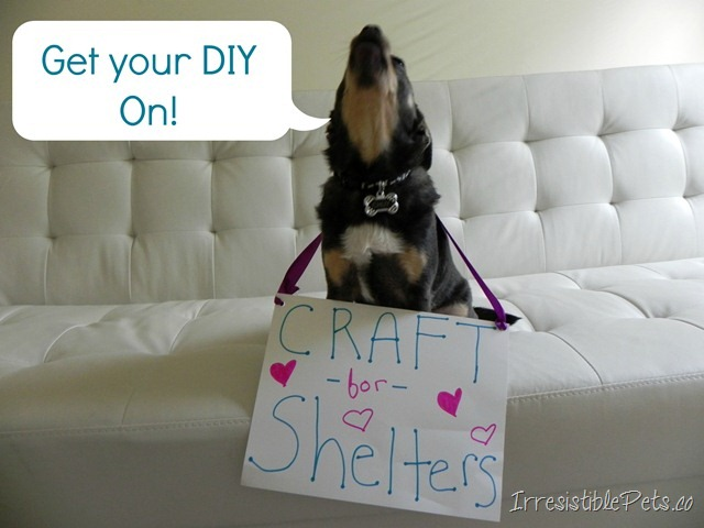 National Craft For Shelters Day Irresistible Pets