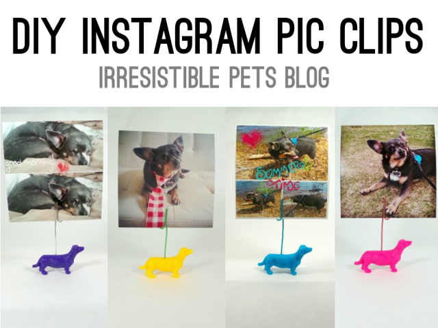 DIY Instagram Pic Clips - IrresistiblePets.co
