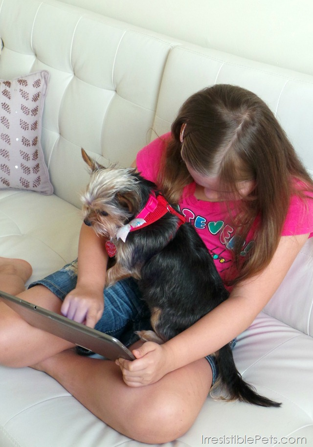 My Dolphin Show App With Your Dog - IrresistiblePets.com