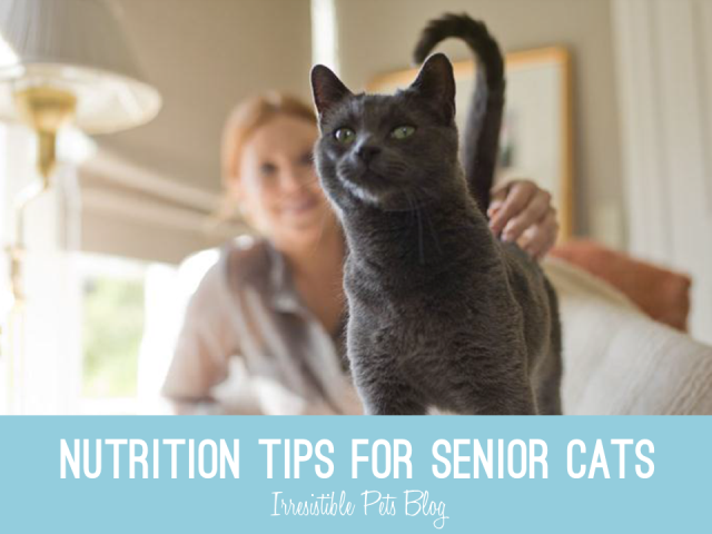 Nutrition Tips for Senior Cats - Hills Science Diet