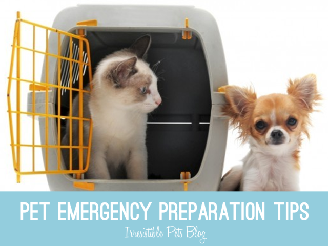 Pet Emergency Prepation Tips from Irresistible Pets and #HillsPet