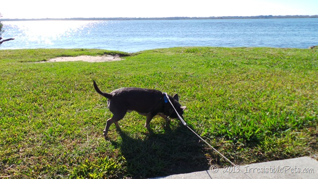 Munden Point Park - Virginia Beach - IrresistiblePets.com