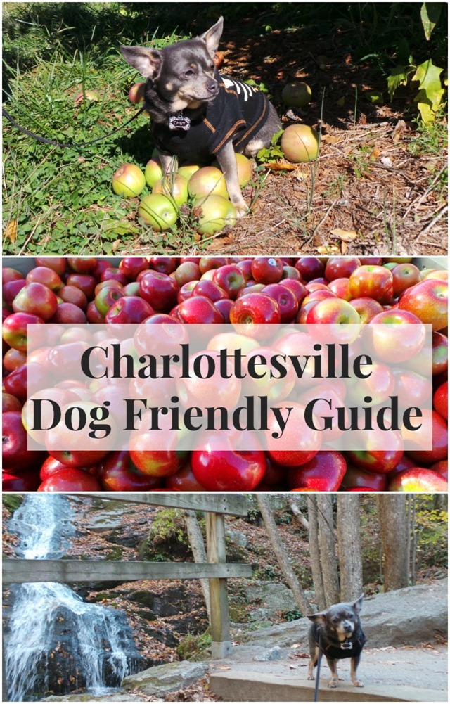 The Irresistibly Dog Friendly Guide To Charlottesville Virginia