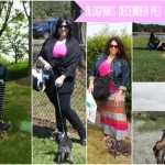 Five Reasons BlogPaws is Irresistible for Pet Bloggers