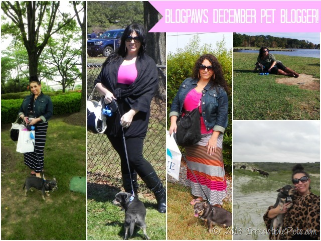 BlogPaws December Pet Blogger of the Month Irresistible Pets