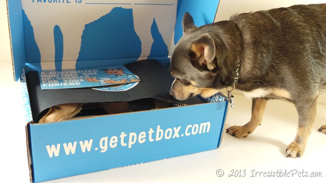 PetBox Review by IrresistiblePets.com 1