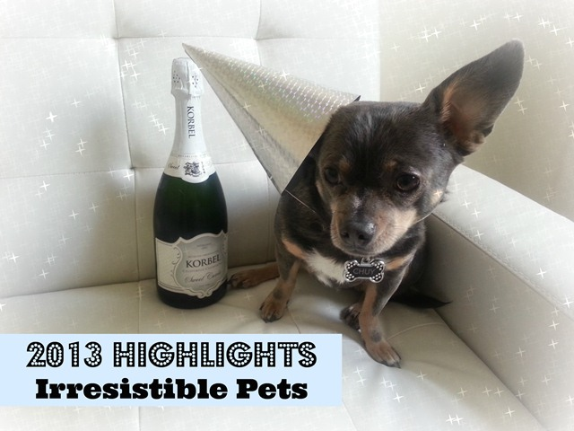 2013 Highlights Irresistible Pets